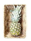 Tropiska ananas frukter i korg — Stockfoto