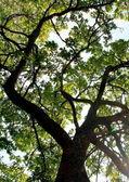 Alberi della foresta. sfondi di natura verde e legno del sole. — Foto Stock