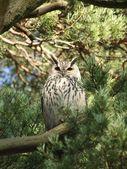 Owl on brunch — Stock Photo