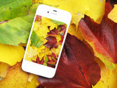 Cell phone on the colorful autumn leaves — Stock Photo