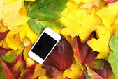 Cell phone on the autumn leaves — Stock Photo