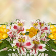 Stock Photo: Spring flowers on background