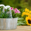 Flowers in pot - Stock Photo