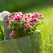 Bloemen in pot — Stockfoto