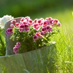 Bloemen in pot — Stockfoto