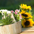 Flowers in pot — Stock Photo