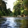 River in jungle - Stock Photo