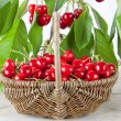 Basket of fresh red cherries — Stock Photo