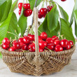 Stock Photo: Basket of fresh red cherries