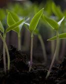 зеленый завод — Стоковое фото