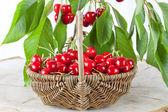 Basket of fresh red cherries — Stock Photo