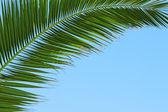 Tropici — Foto Stock