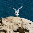 Seagulls — Stock Photo #10021388