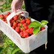 Strawberries in plastic punnet - Stock Photo