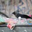 Bird on garbage dump - Stock Photo
