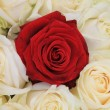 Red and white roses bridal arrangement — Lizenzfreies Foto