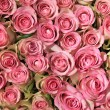 Pink roses in a group — Stock Photo #10078658