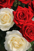 White and red roses in a bouquet — Stock Photo
