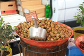 Olives on a french market — Stock Photo