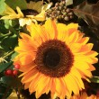 Bright yellow sunflower - Photo