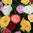 Multicolored rose arrangement after a rainshower — Stock Photo #8534594