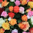 Multicolored rose arrangement — 图库照片