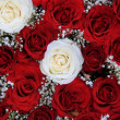 Red and white roses in a valentine's bouquet — Foto Stock