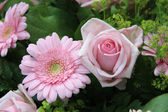 Soft pink rose and gerbera — Stock Photo