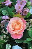 Große weiche rosa rose — Stockfoto