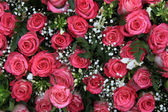 Pink roses and gypsophila (baby's breath) — Stock Photo