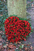 Red roses in heart shape — Stock Photo
