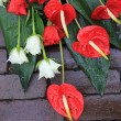 Stock Photo: Red and white sympathy flower arrangement on pavement