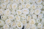 Group of white roses after a rainshower — Stock Photo