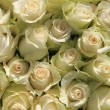 A big group of white roses — Stock fotografie