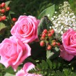 Big pink roses in the sun - Foto Stock