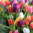 Mixed spring tulips bouquet — Stock Photo #9496678