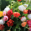 Mixed spring tulips bouquet - Foto Stock
