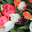 Mixed spring tulips bouquet — Stock Photo #9497846