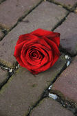Single red rose on the pavement — Photo