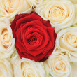 Red and white roses bridal arrangement — Stock Photo #9820406