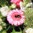 Bee on a pink gerbera — Stock Photo