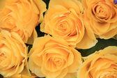 Yellow rose bouquet — Stock Photo