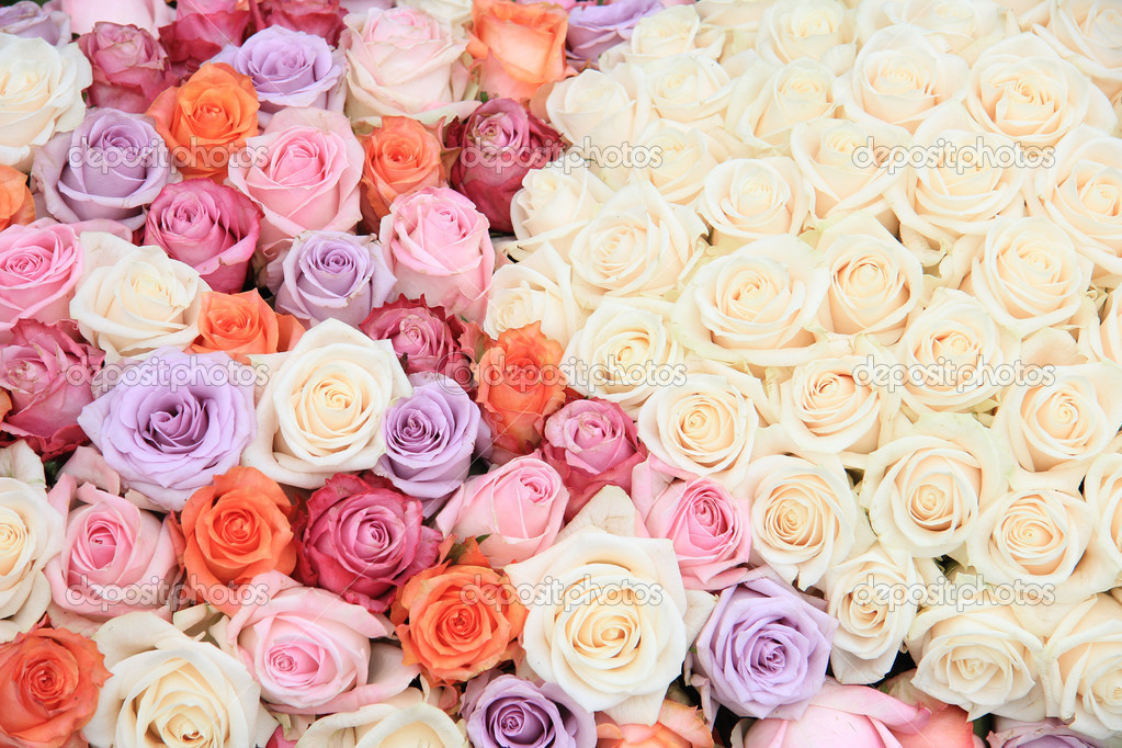 pastel rose wedding flowers stock photo portosabbia 9820425. Black Bedroom Furniture Sets. Home Design Ideas