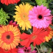 Multicolored gerbera arrangement in vivid colors — Stock Photo #9926697