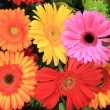 Multicolored gerbera arrangement in vivid colors — Stock Photo #9926704