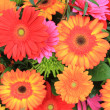 Multicolored gerbera arrangement in vivid colors — Stock Photo