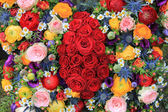 Smíšené letní květiny — Stock fotografie