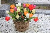 Tulip bouquet in wicker basket — Stock Photo