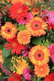 Multicolored gerbera arrangement in vivid colors — Stock Photo