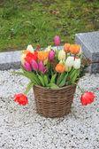 Buquê de tulipa na cesta de vime — Fotografia Stock